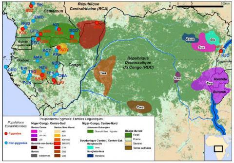 Diversité génétique et linguistiques des populations d'Afrique Centrale
