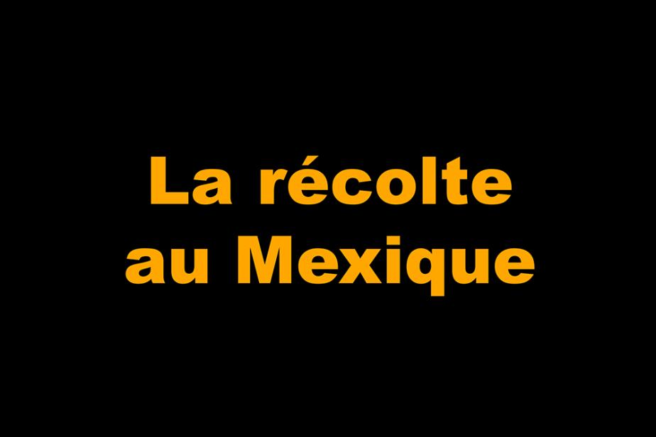 la_recolte.png