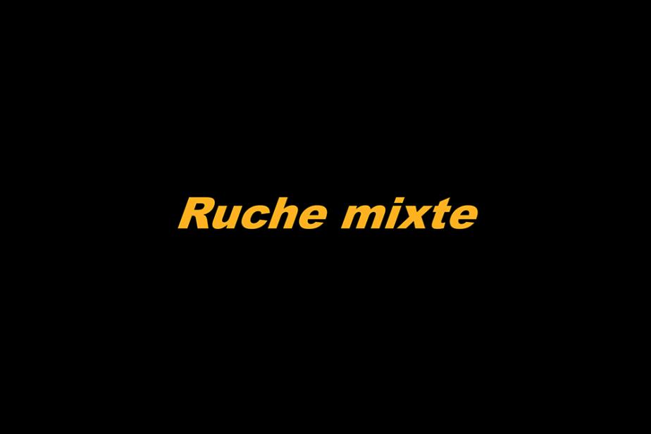 r-ruche_mixte.png