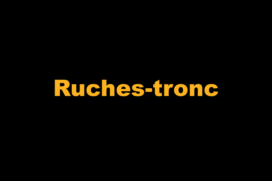 r-ruches-tronc.png