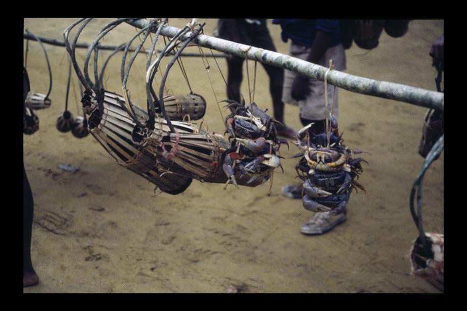 d2-13-crabes02-w.jpg