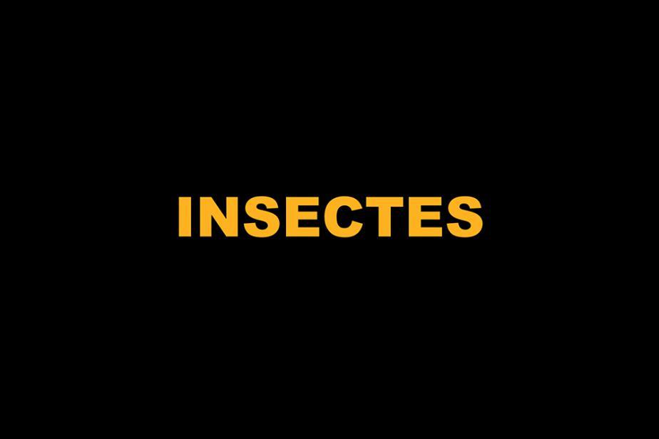 i_-_0a_-_titre_insectes.jpg
