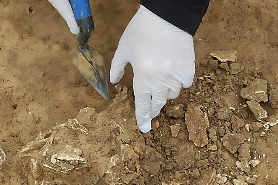 Prélèvements sur les fouilles de Marly-la-Ville (95). Prélèvement sur des restes osseux.