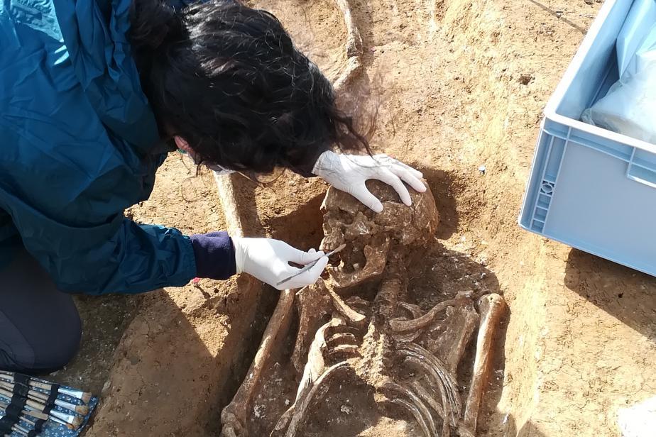 Prélèvements sur les fouilles de Tremblay-en-France (93). Prélèvement de l'os pétreux sur un squelette.